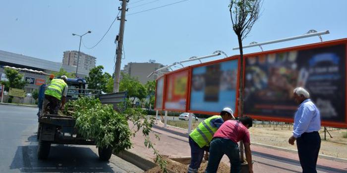 Reklam firması tarafından kesilen ağaçların yerine yenileri dikildi