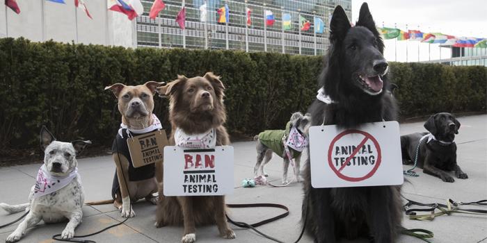 Köpekler, hayvan deneylerinin durdurulması için eylem yaptı