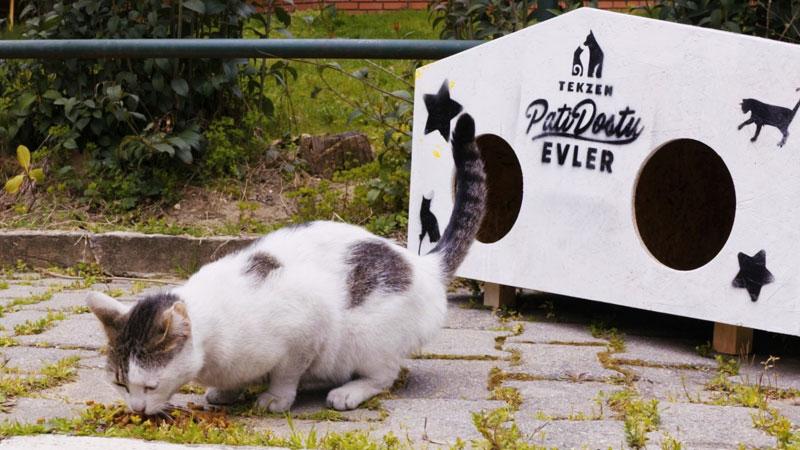 Tekzen'den sokak hayvanlarına özel çalışma