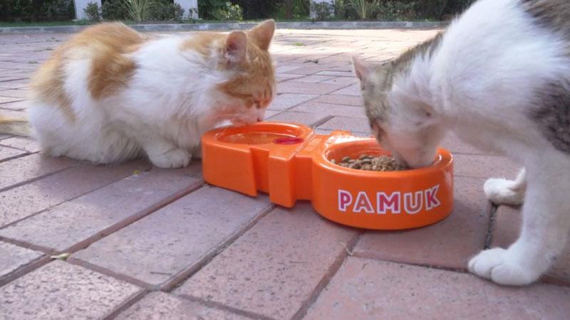 Albaraka'dan sokak kedileri için kampanya