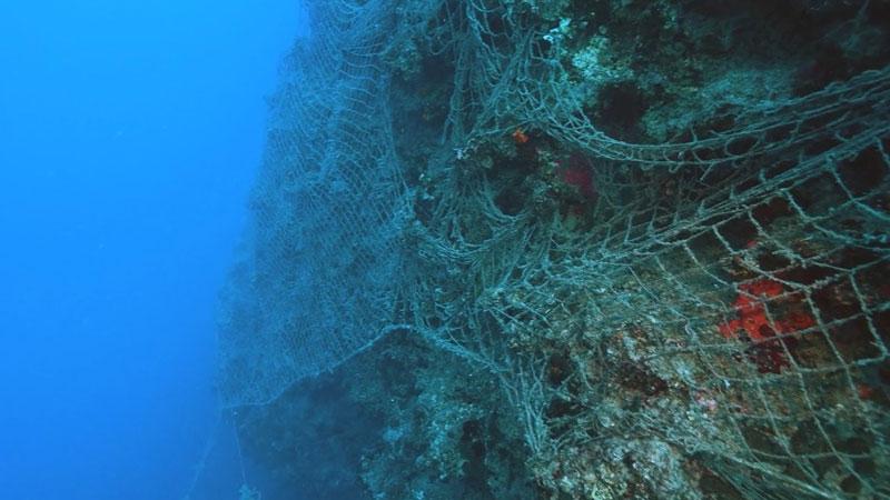 """Roche İlaç ve ADYSK """"Denizler Yaşam Dolsun"""" dedi"""