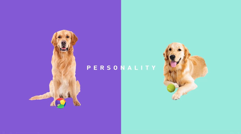 Her köpek özeldir…