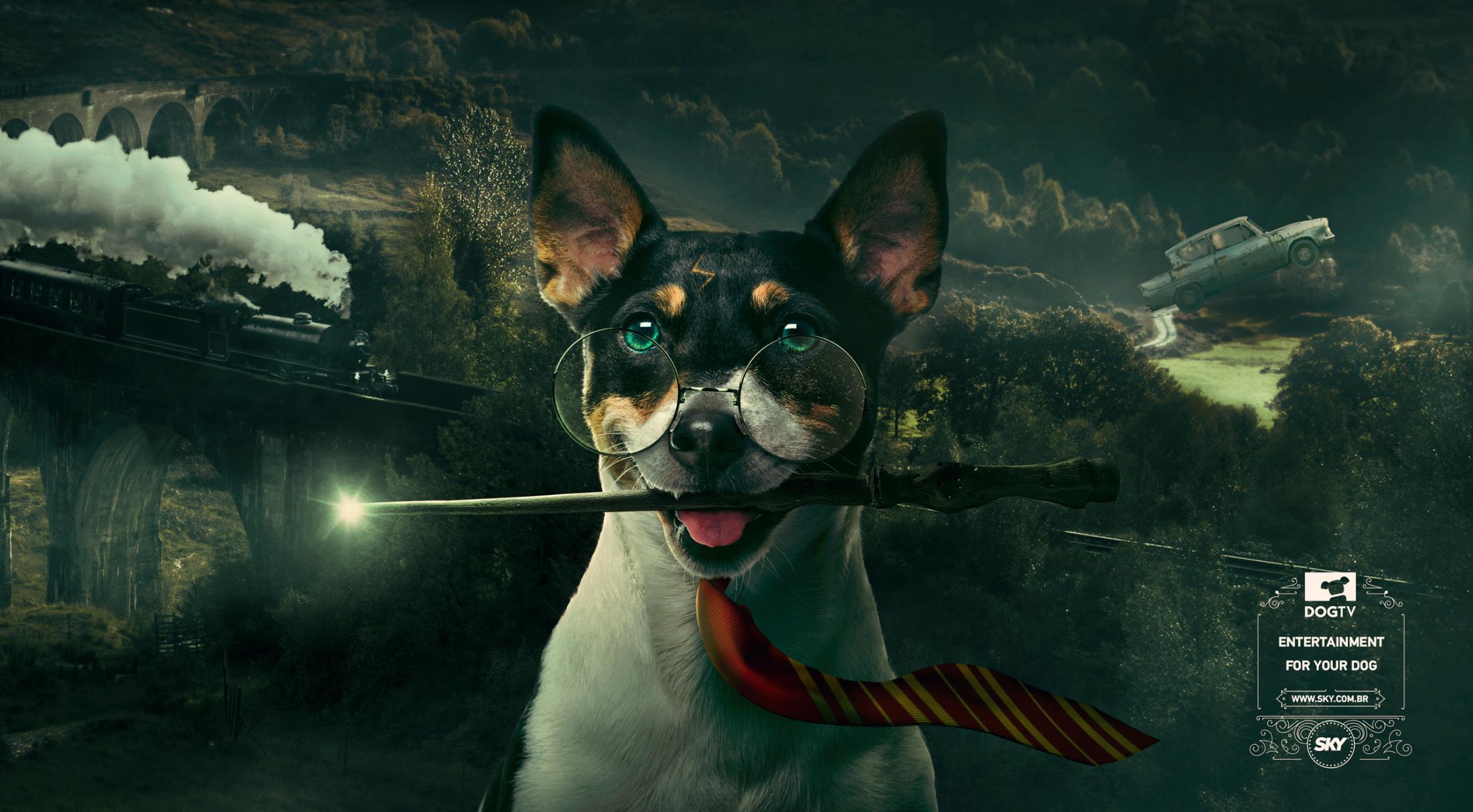 """Köpekler için yayın yapan dünyanın ilk köpek kanalı """"DogTV"""" yayında"""