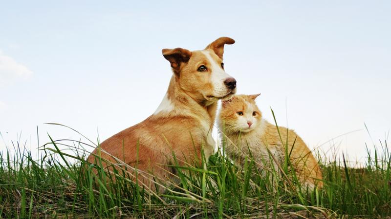"""Getir'den sokak hayvanları için yeni proje: """"Yardım Maması"""""""