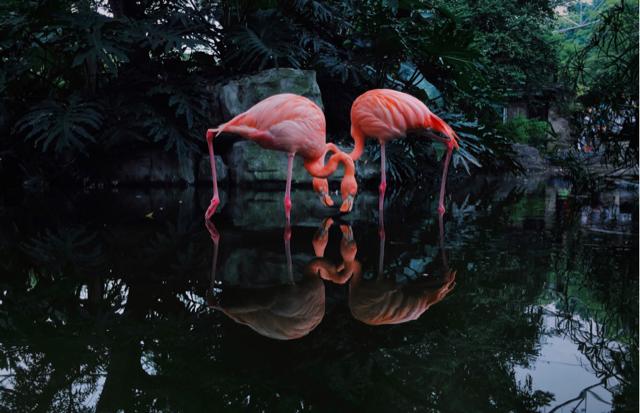 2020 iPhone Fotoğraf Ödülleri'nin kazananları açıklandı