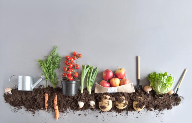 Önceliğimiz yerel gıda kaynağı oldu!