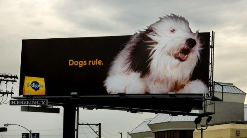 Pedigree'nin bilboardları neden köpekleri takip ediyor?