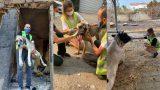 Afet mağduru hayvanlar için HAÇİKO Yaşam Çiftliği kuruluyor