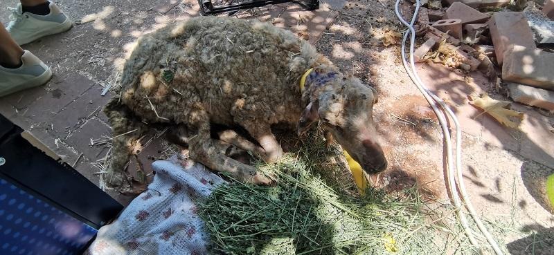 haytap yangından etkilenen hayvanlara hastane kurdu