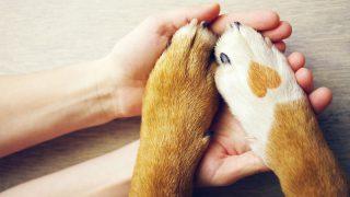 Hayvanları Koruma Günü'ne özel, markalardan kalpleri ısıtan 10 kampanya