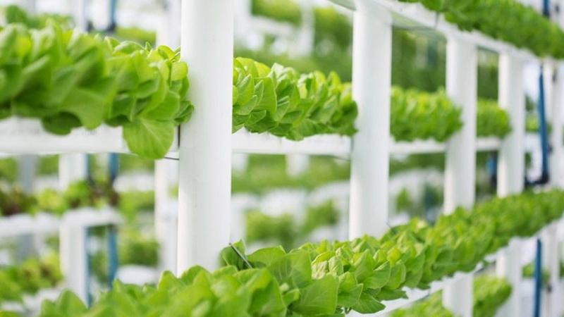 """Gıda krizine çözüm: """"dikey tarım"""""""