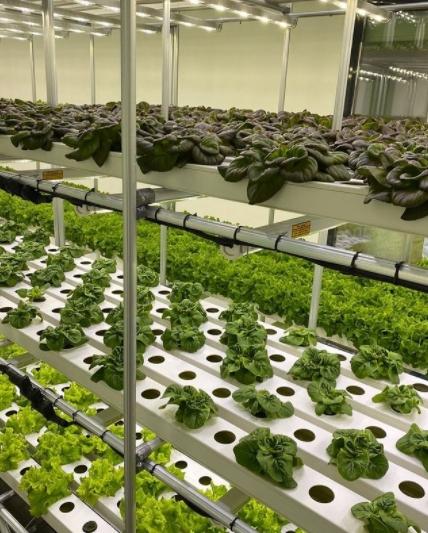Kapalı alan dikey tarım tesisi